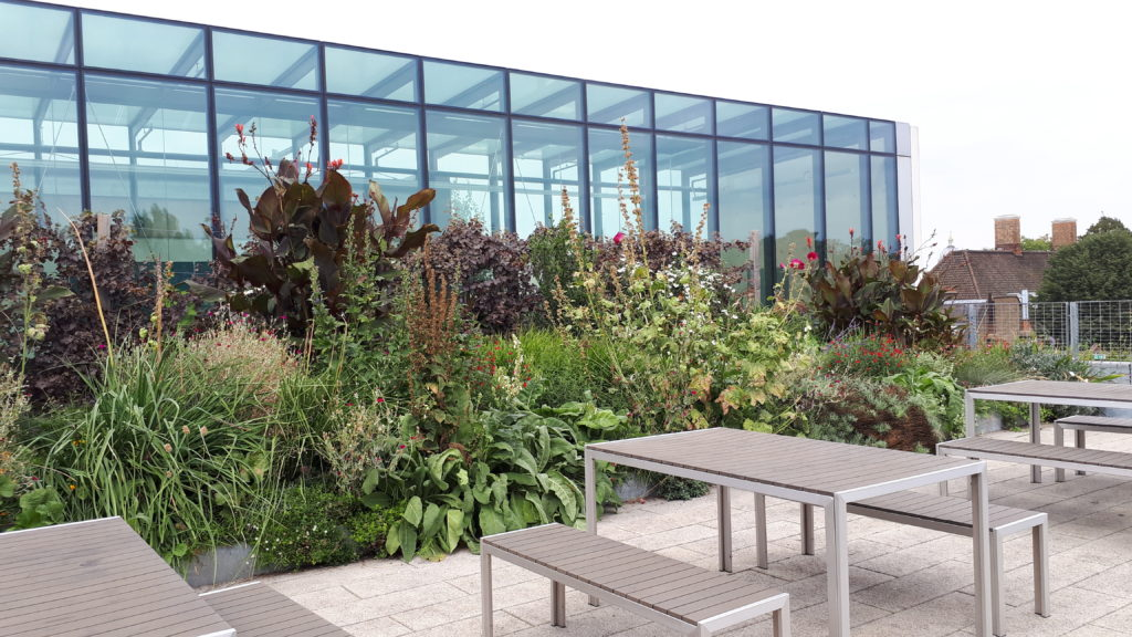 Biophilic Design University of Greenwich School of Architecture's rooftop terraces